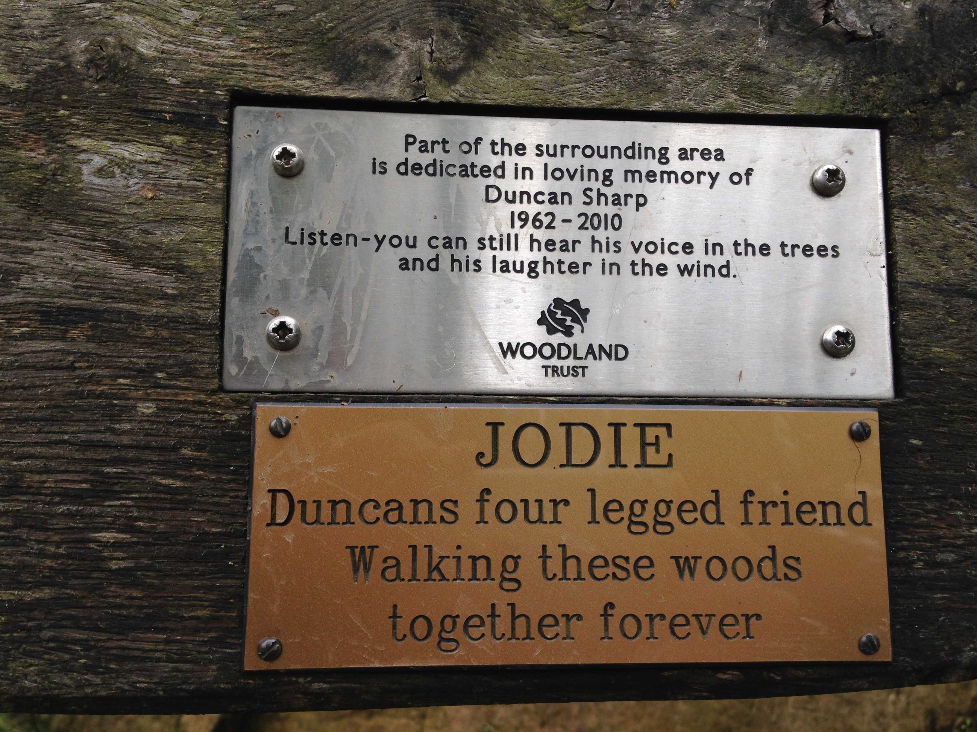 The Journey of a Memorial Bench, from Woodland Walk to Basement Techno